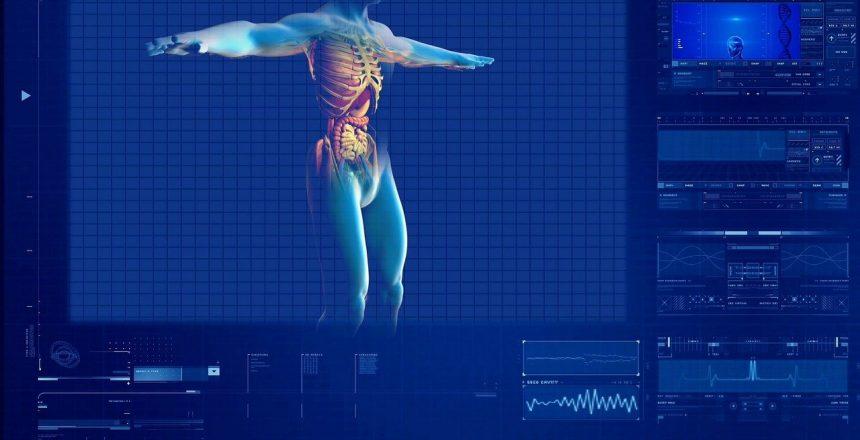 human-digestive-system-163714_1280